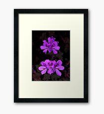 Purple Palagonia Framed Print