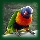 Cheeky Lorikeet by scholara