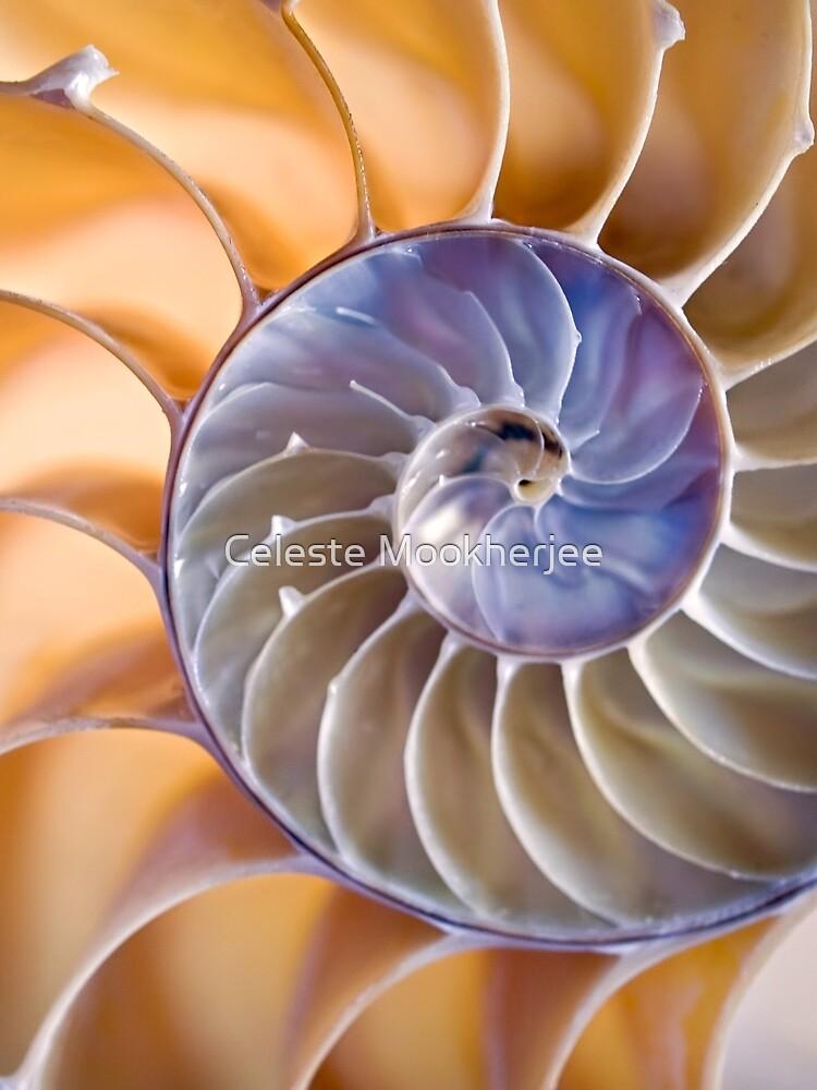 Chambered nautilus by Celeste Mookherjee