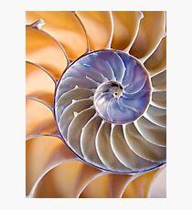 Chambered nautilus Photographic Print