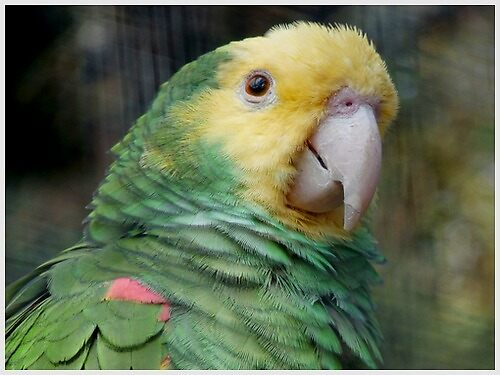 PARROT FASHION by Marilyn Grimble