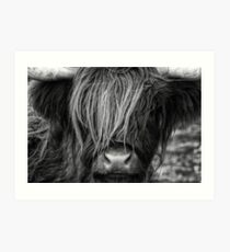 Highland Cow, Scotland Art Print