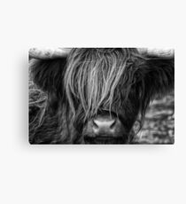 Highland Cow, Scotland Canvas Print