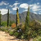 Franschhoek, Western Cape, South Africa by Sharon Bishop