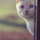 Looking at you by © Joe  Beasley IPA