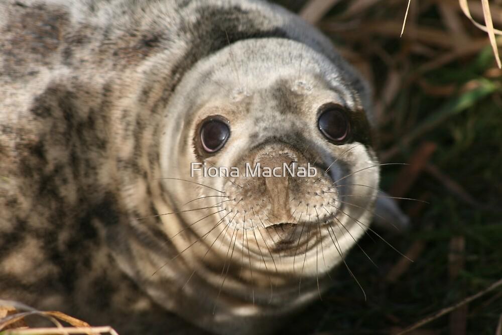Seal by Fiona MacNab