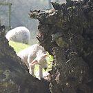 Clambering Lamb by CreativeEm