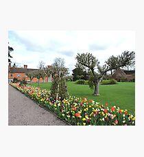 Tulip Line Photographic Print