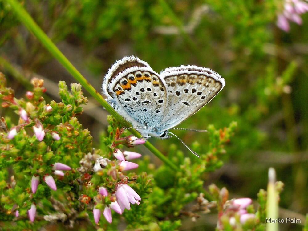 Not blue, but butterfly blue :) by Marko Palm