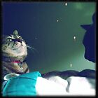 cat in the stars by Louise LeGresley
