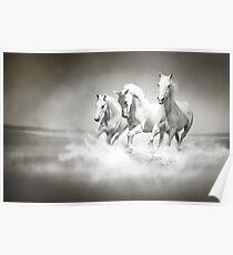 Wild White Horses Poster