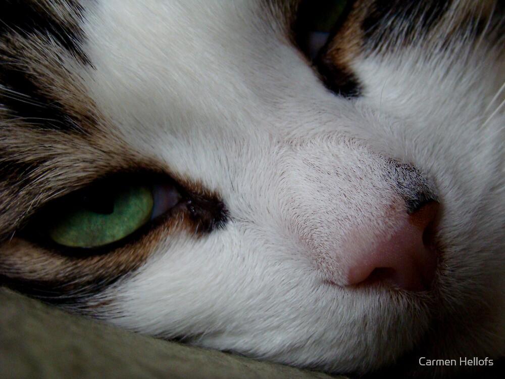 Crazy Cat by Carmen Hellofs