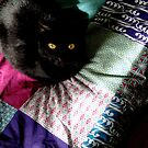 Black cat on patchwork by Louise LeGresley