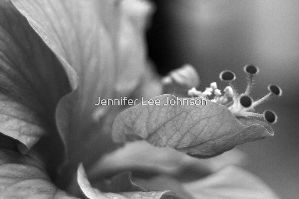 Hibiscus by Jennifer Lee Johnson