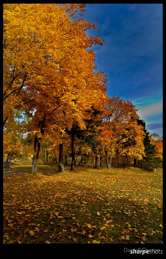 Autumn Row by Darrell Sharpe