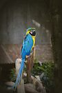 Macaw Parrot by Elaine Teague