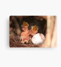 Just Hatched Canvas Print