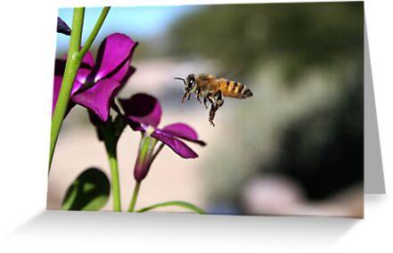 Bee by Daniel J. McCauley IV