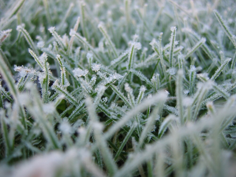 Frosted Grass by Rod Skea