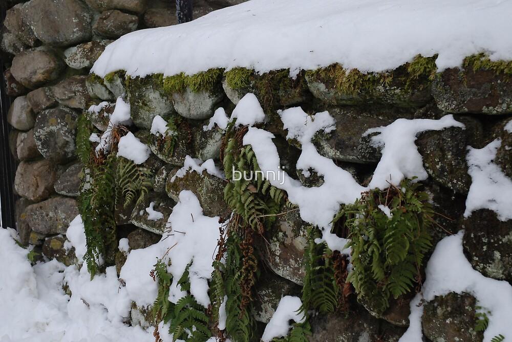Snow, Moss & Stone by bunnij