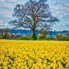 Spring Colours by vivsworld