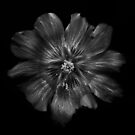 Backyard Flowers In Black And White 22 by Brian Carson