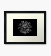 Backyard Flowers In Black And White 22 Framed Print