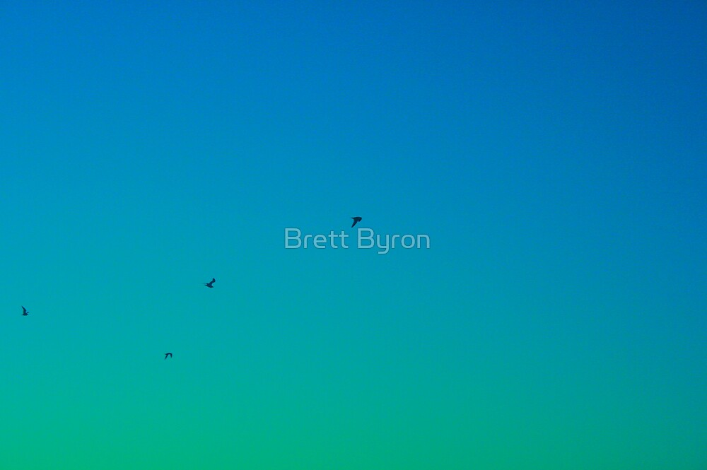 Sick Birds by Brett Byron