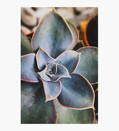 close up of succulent Photographic Print