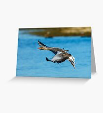 Greylag fly-by Greeting Card