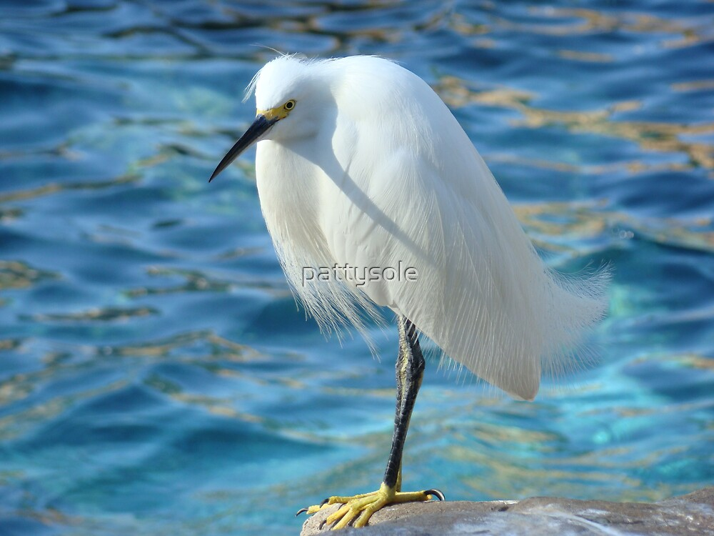 Egret by pattysole