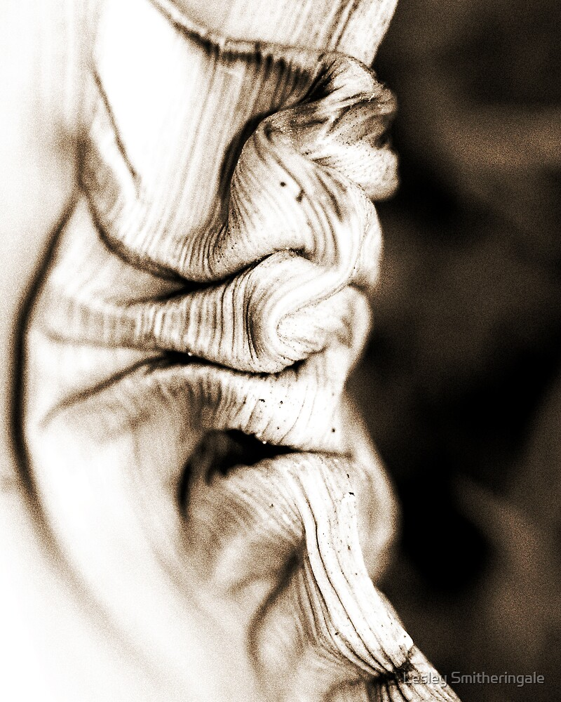 Twisted Palm Frond by Lesley Smitheringale