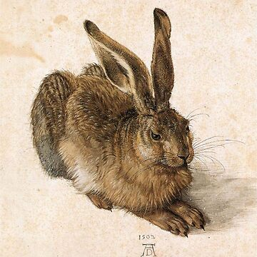 HARE, Young Hare, DURER, Albrecht Dürer, (1502), Watercolour, Albertina, Vienna by TOMSREDBUBBLE