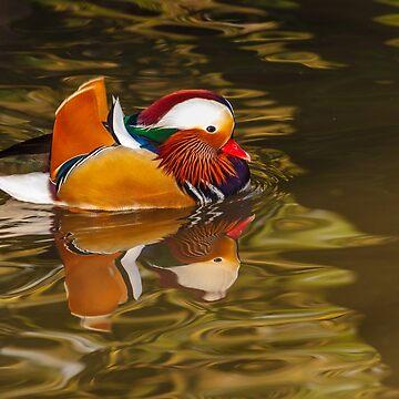 Mandarin Duck by Dalyn