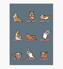 English Bulldog Yoga Photographic Print