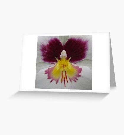 Butterfly in orchid Greeting Card