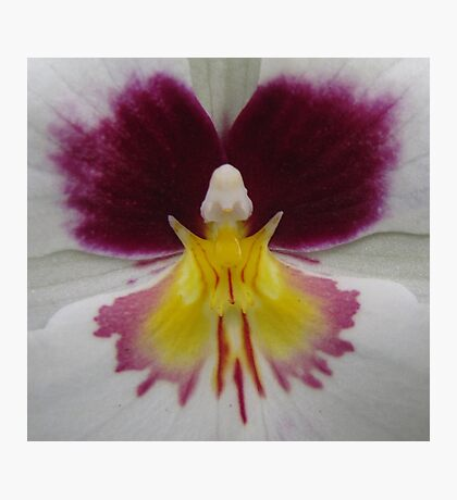 Butterfly in orchid Photographic Print
