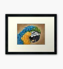 Macaw Framed Print