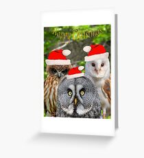 Owls wearing a Christmas hats Greeting Card