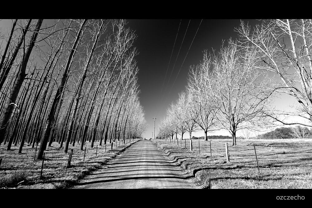 Tree lined  by ozczecho