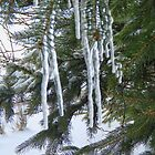 Icicles On The Spruce Branches by MaeBelle
