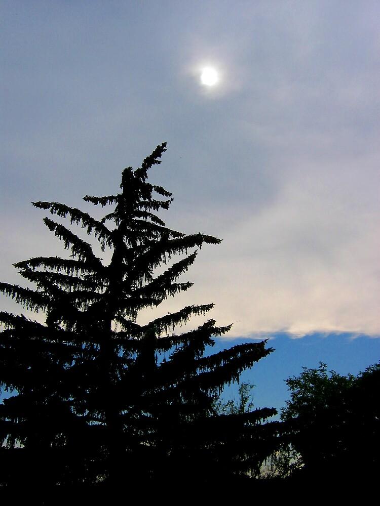Tree by Holls