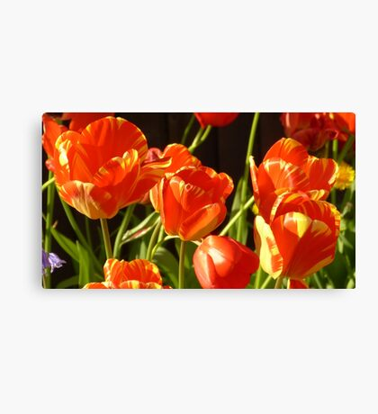 Golden tulips Canvas Print