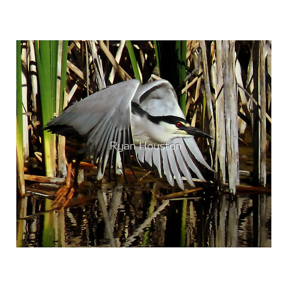 Black-Crowned Night Heron by Ryan Houston