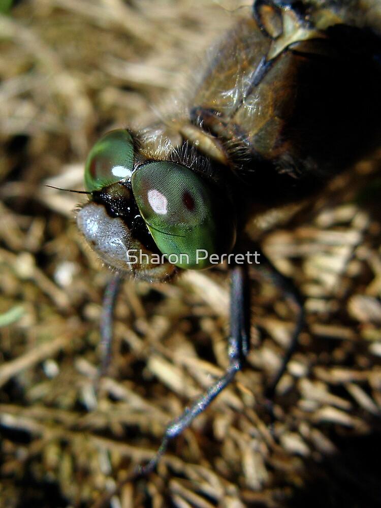Green eyed Monster by Sharon Perrett