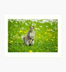 Spring Squirrel Art Print