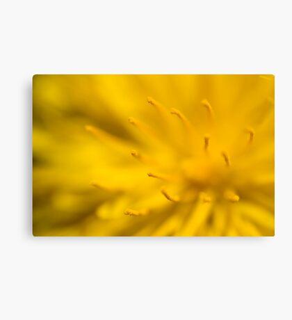 Dandelion flower Canvas Print