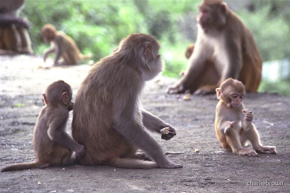 Nepali monkeys, Katmandhu by charliebrown