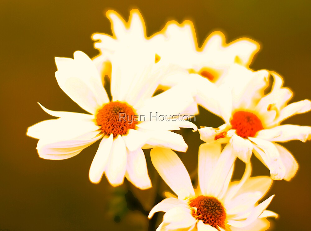 Abstract Daisies by Ryan Houston