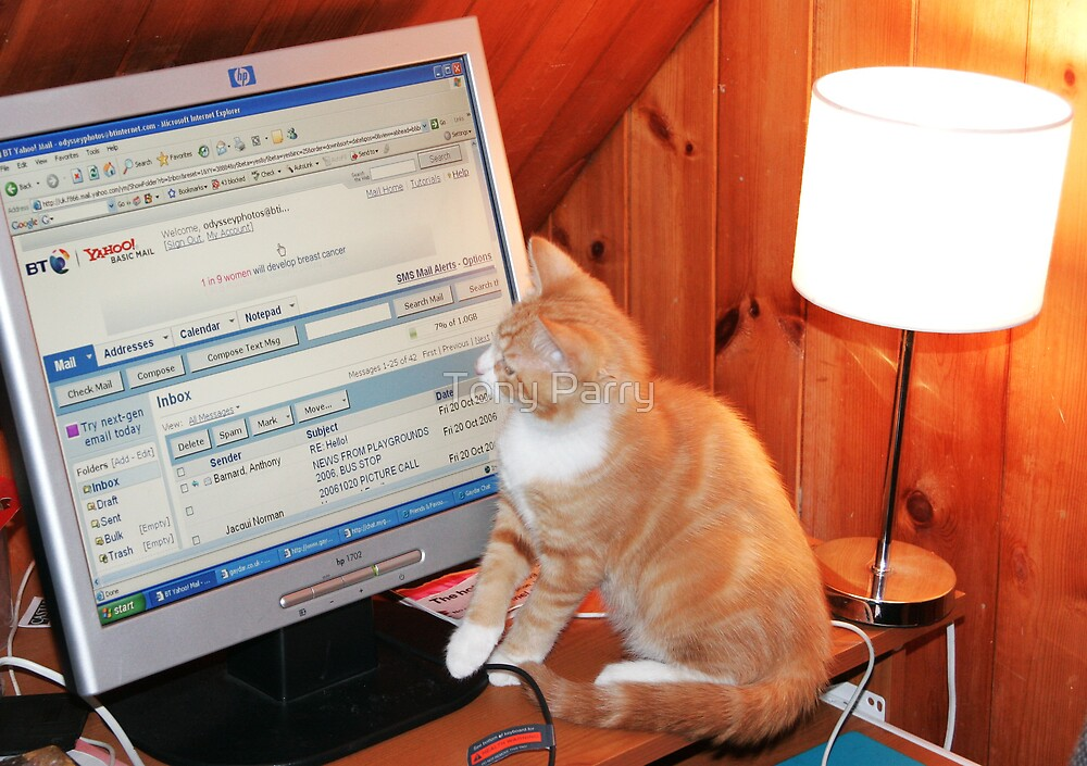 CHECKING FOR CAT E-MAIL by Tony Parry